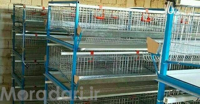 لیست قیمت قفس مرغ تخمگذار